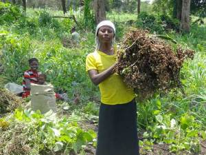 Woman harvesting groundnuts in South Sudan