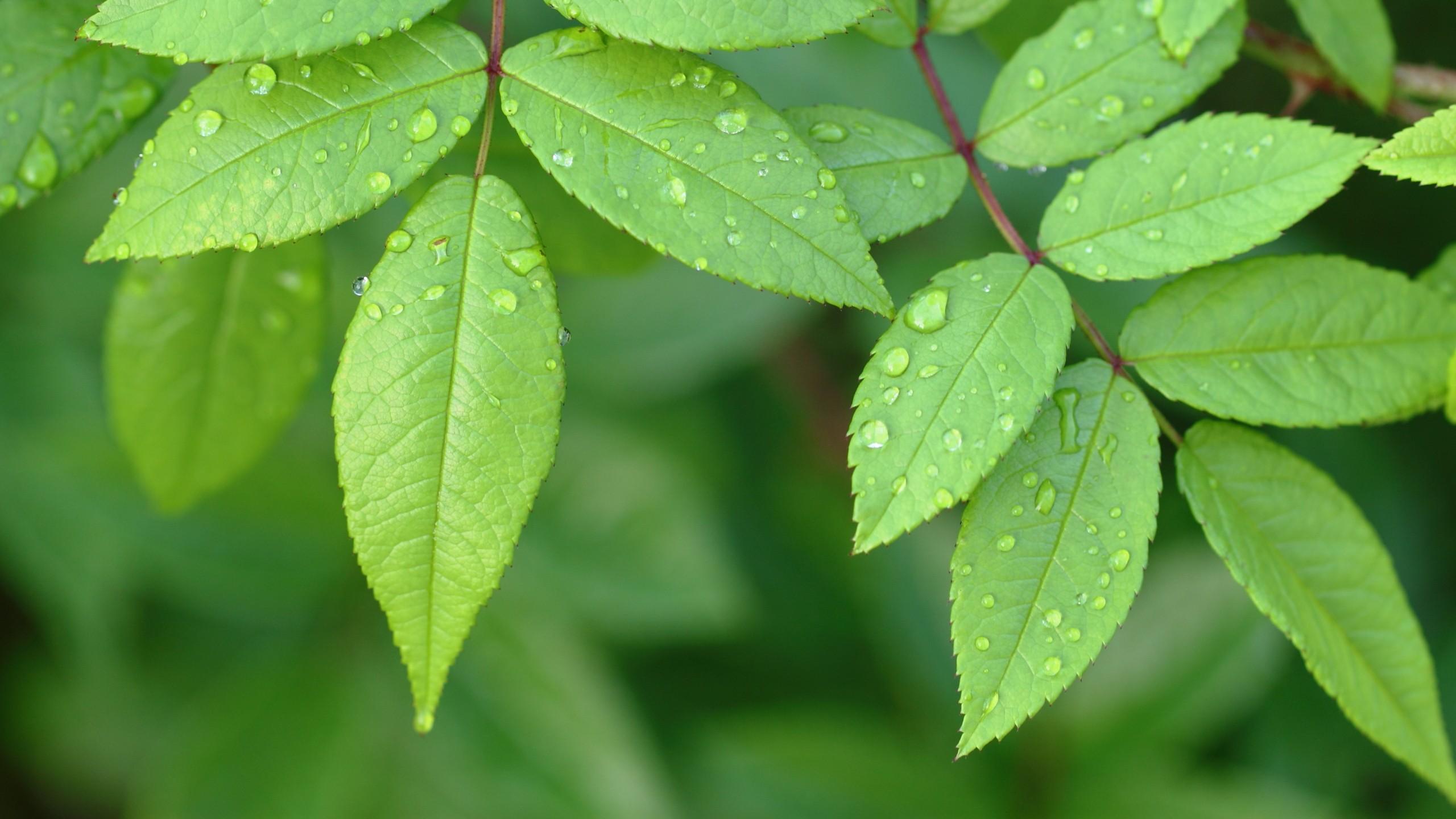 little green leaves free