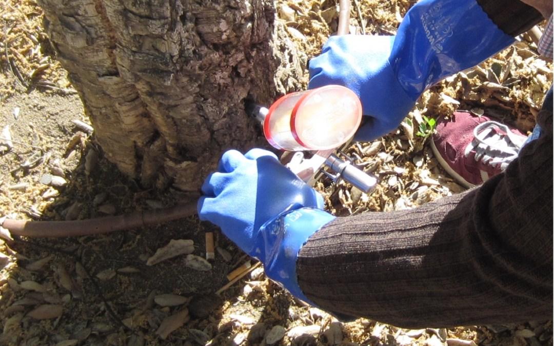 Últimas plazas de Curso práctico de Endoterapia en Arbolado por Arborsystems