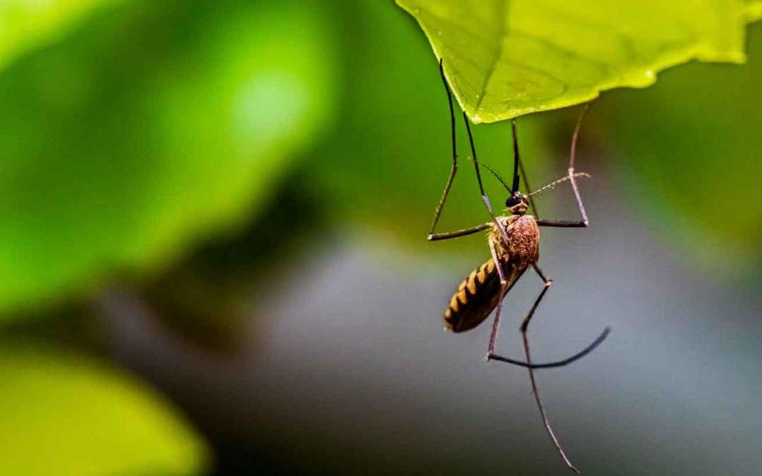 RECORDATORIO: te ayudamos en la lucha contra los mosquitos