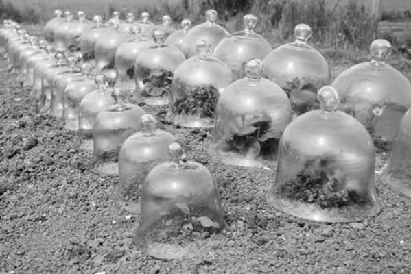 campanas de vidrio