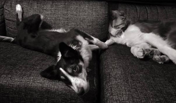 El vínculo y la paz, elementos inseparables