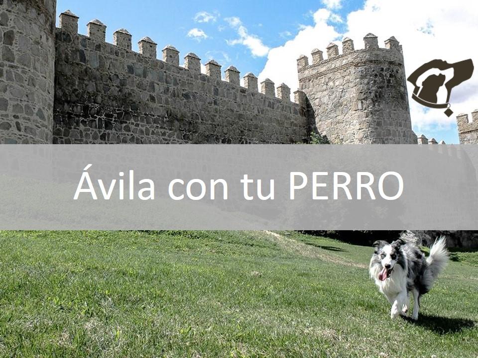 Ávila con tu perro