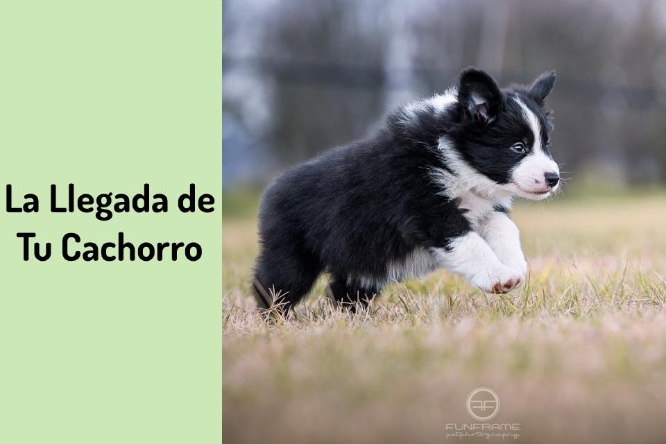la llegada de tu cachorro