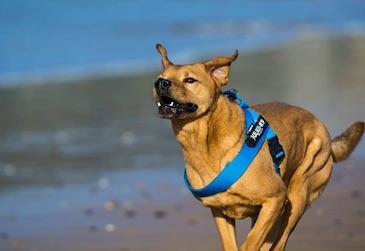 amante del entrenamiento de perros