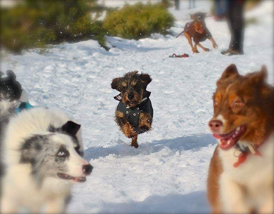 Perro anciano en la nieve