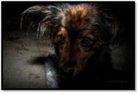 Entrenar perro actor