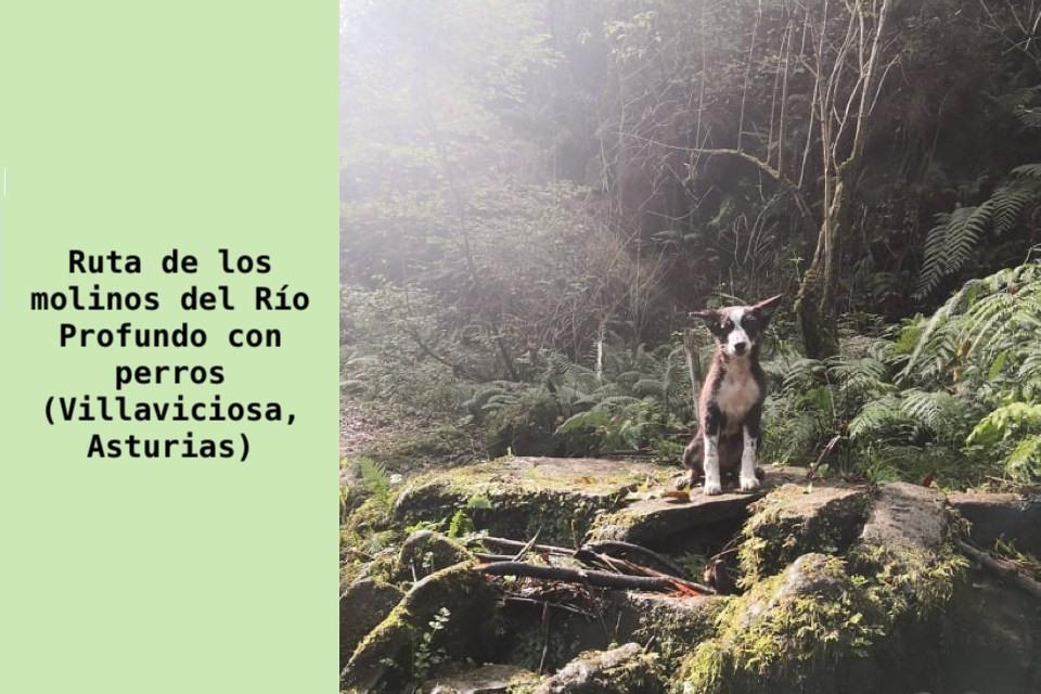 Ruta de los Molinos del Río Profundo con perros Asturias