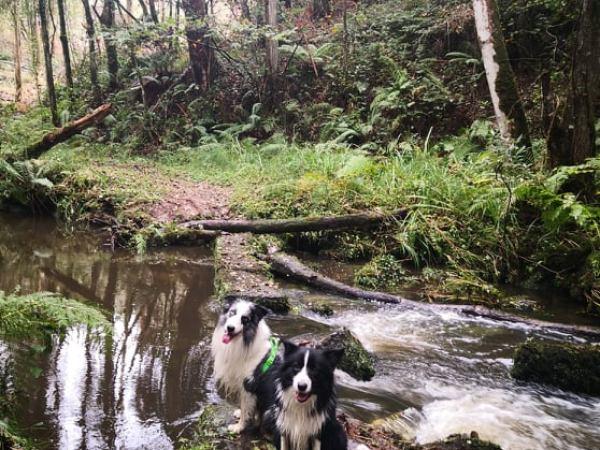 Ruta de los molinos del Rio Profundo con perro, Asturias