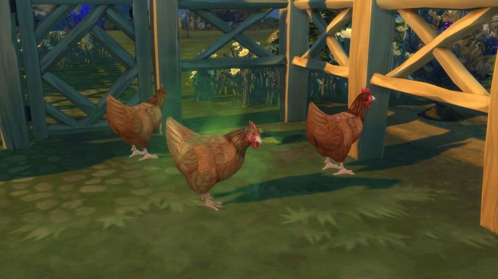 Los-Sims-4-Vida-en-el-Pueblo-limpiar-gallinas-screenshots