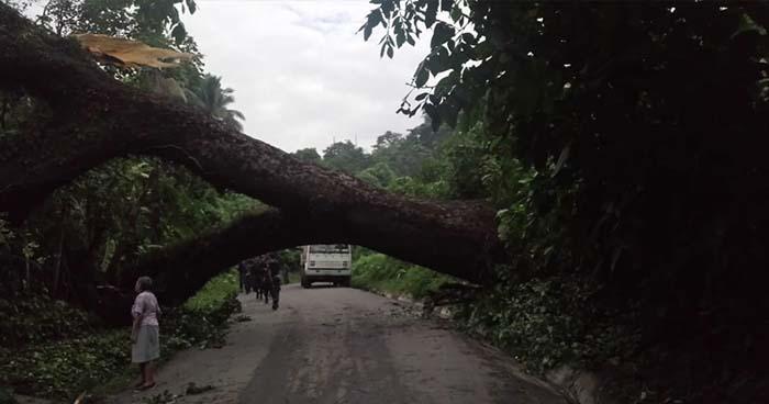 Árbol provoca irregularidades en el suministro de agua potable en varios municipios de San Salvador