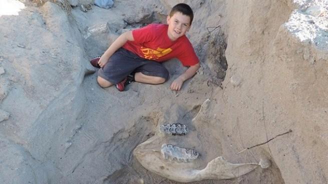 Niño encuentra cráneo de un elefante primitivo de más de un millón de años