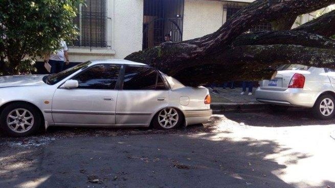Árbol cae y aplasta un vehículo en la ciudad de San Salvador