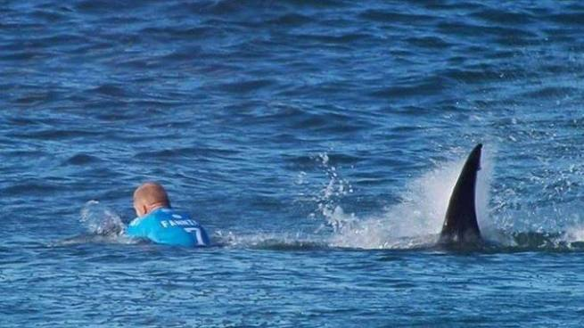 Surfista se salva de ser devorado por un tiburón blanco
