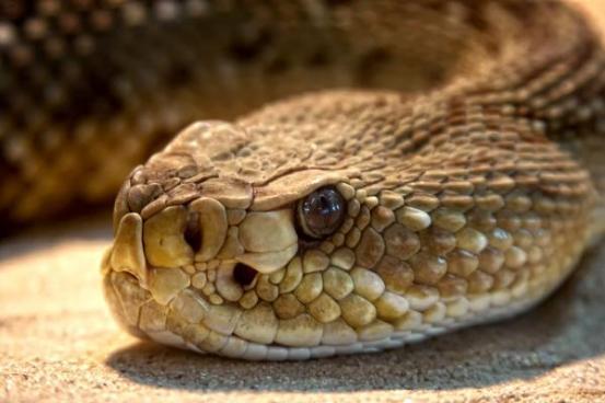 Niño de 14 años mata accidentalmente a su hermano por querer matar una serpiente