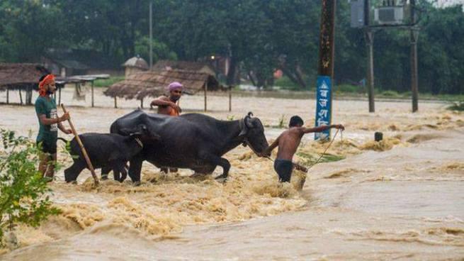 Lluvias torrenciales dejan al menos 66 personas fallecidas en Nepal e India