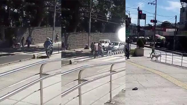 Perro causa admiración por la forma de cruzar una calle en San Salvador