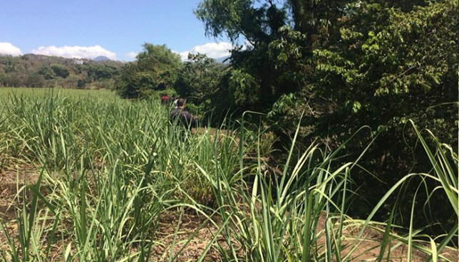 Encuentran el cadáver maniatado de una joven en un cañal de Izalco