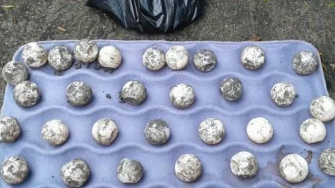 Incautan huevos de tortuga marina y otras especies en peligro de extinción en mercado de San Martín
