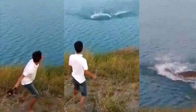 Hombre lanza un cachorro a un lago infestado de cocodrilos