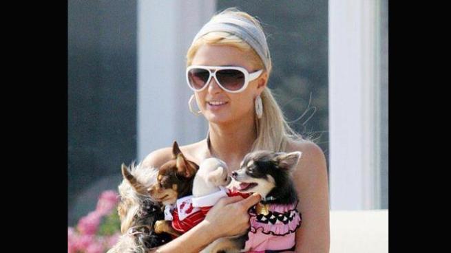 Los perros de Paris Hilton tienen su propia mansión hasta con aire acondicionado