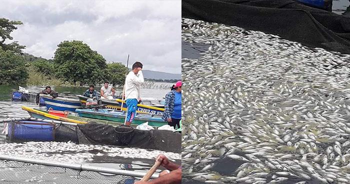 Investigan la aparición de miles de peces muertos en el lago de Güija, Metapán