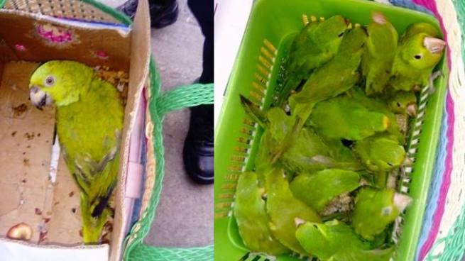 PNC recupera aves que eran comercializados en el mercado central de San Salvador