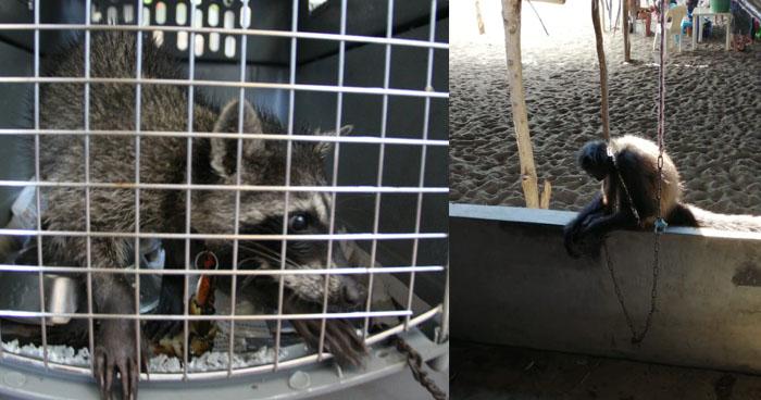 Rescatan animales de un restaurante de Acajutla, Sonsonate