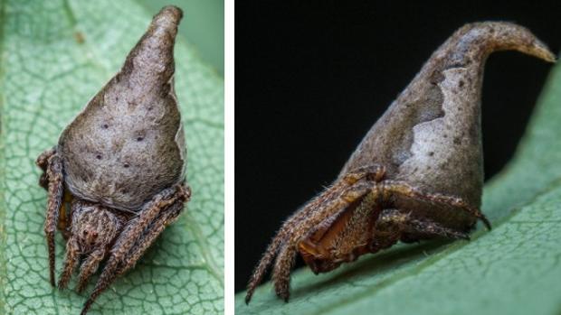 Nombran «Gryffindor» a una nueva especie de araña en honor a Harry Potter