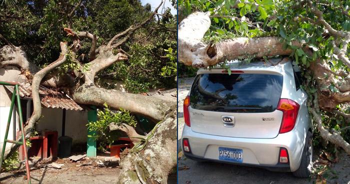Árbol cae sobre 4 vehículos en balneario de Ilopango