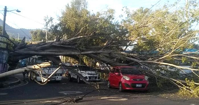 Árbol cae sobre varios vehículos en salida de colonia Sierra Morena de Soyapango