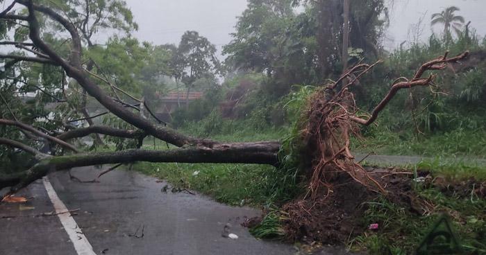 Lluvia con fuertes vientos ocasionaron caída de árboles en diferentes puntos del país