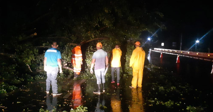 Al menos 19 árboles cayeron anoche en carretera a Tecoluca, San Vicente