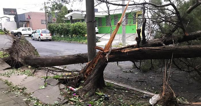 Caída de árboles y cortes de energía eléctrica por fuertes vientos