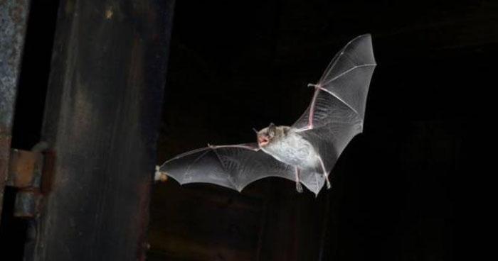 Más de 20 personas fueron mordidas por murciélagos en Nueva Esparta, La Unión