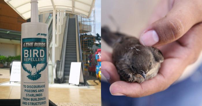 """Este es el pegamento que utilizaron como """"repelente"""" para aves en La Gran Vía"""