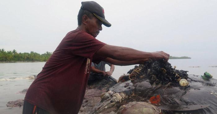 Hallan muerta a una ballena con más de 1.000 objetos de plástico en el estómago