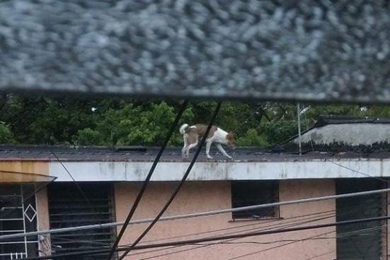Bomberos rescatan a perro atrapado hace varios días en el techo de una casa en San Salvador