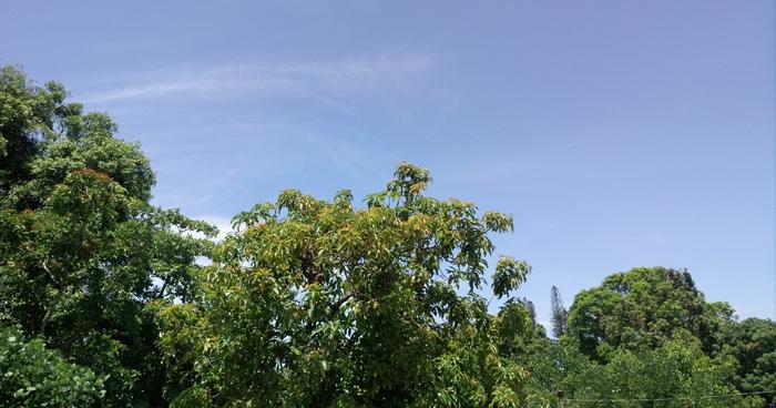 Continuará ambiente caluroso y sofocante durante el día y primeras horas de la noche