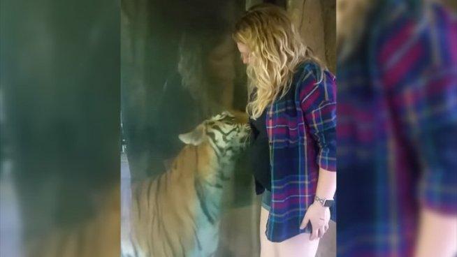 Una embarazada se acerca a un tigre en un zoológico y esto es lo que pasa