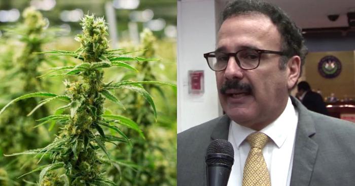Diputado propone legalizar la Marihuana medicinal en El Salvador