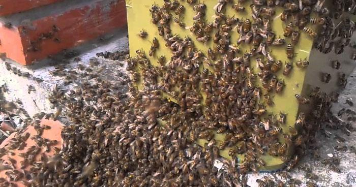 Empleado municipal muere por ataque de enjambre de abejas en Santa Ana