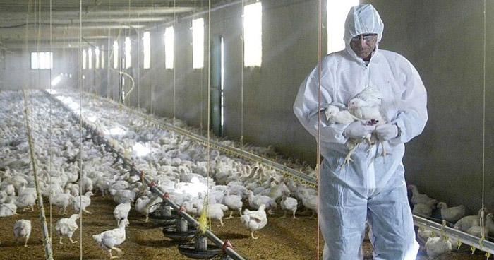 Detectan en China el primer caso mundial de gripe aviar H10N3 en humanos