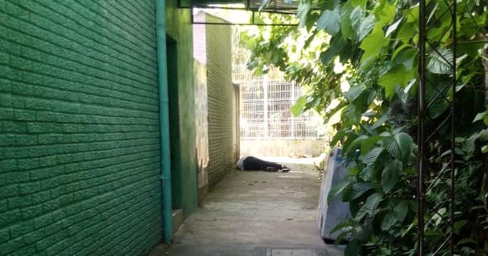 Pandilleros privaron de libertad a un joven y lo asesinan en colonia de San Martín