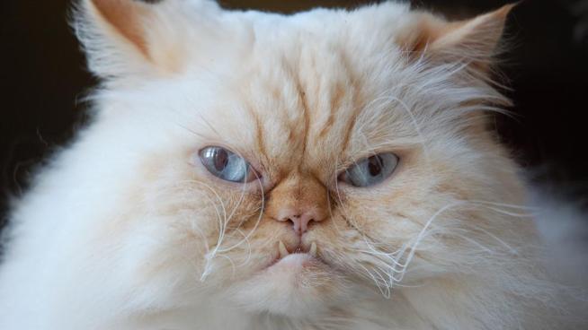 Gato mata de una mordida a una mujer en Japón