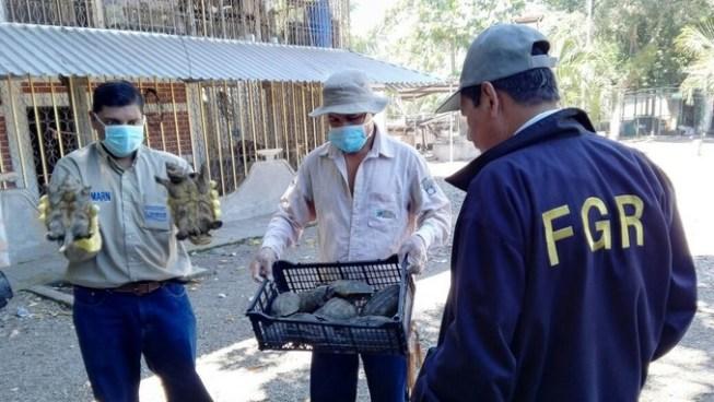 Fiscalía incauta más de 2 mil tortugas en un vivero de El Rosario, La Paz