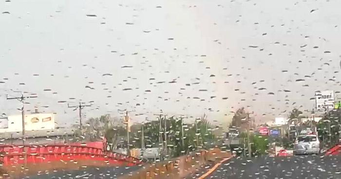 Acercamiento de una Onda Tropical influenciará lluvias leves sobre el territorio