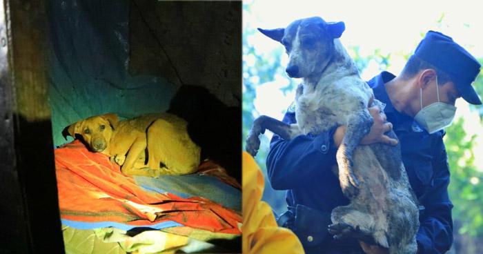 Rescatan con vida a mascotas de familias soterradas en Nejapa