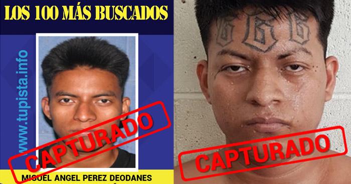 """Capturan a el """"Sombra"""" peligroso pandillero, uno de la lista de los 100 Más Buscados"""