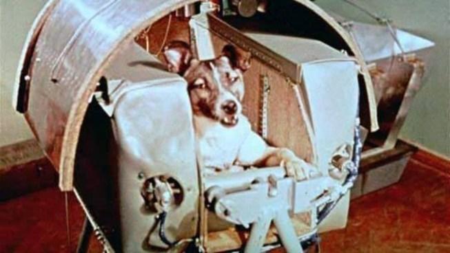 Se cumplen 60 años del viaje espacial de la perrita Laika